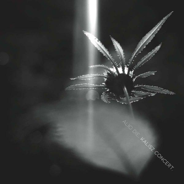 alio die kalisz concert CD